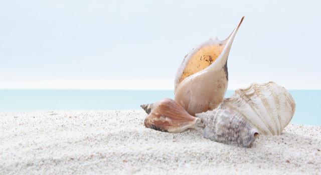 貝殻がテーマの結婚式
