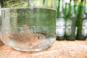 アウトドアウェディング-魚